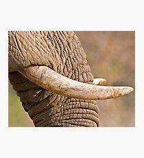 Ivory Photographic Print