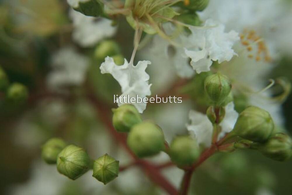 bloom by littlebeebutts
