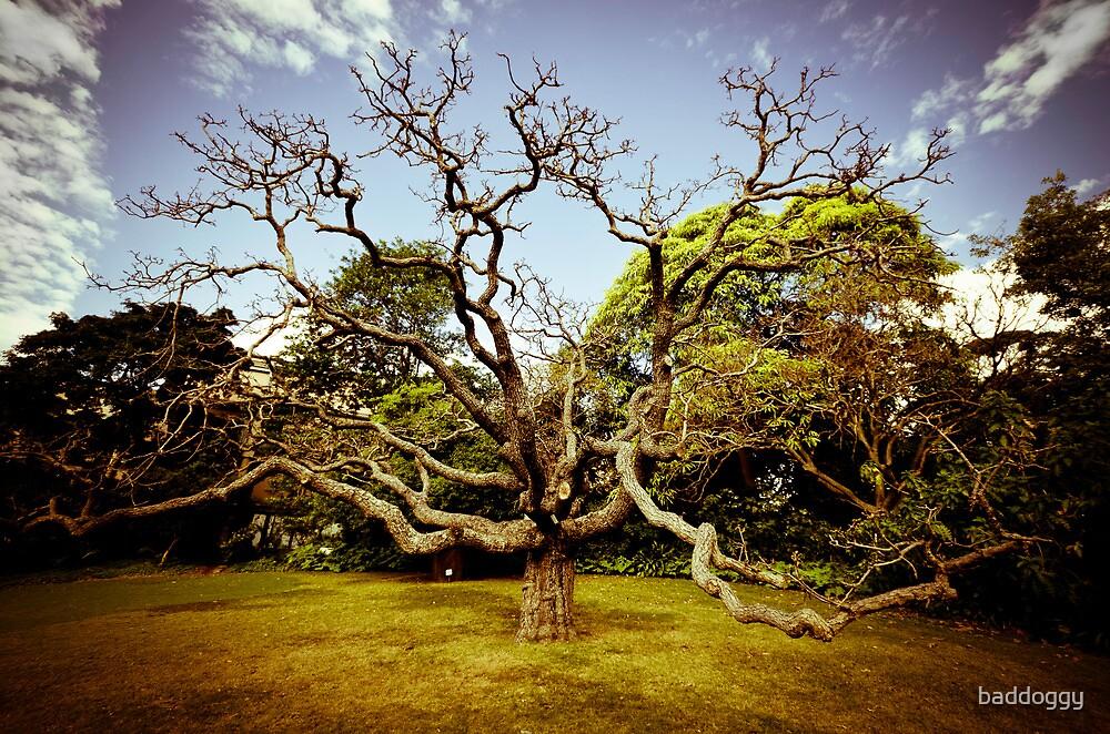 The Botanic Tree by baddoggy