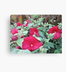 Somewhere In Hibiscus Land Canvas Print