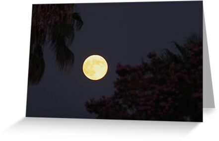 Full moon 8-13-2011 by DonnaMoore