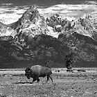 Give Me A Home Where The Buffalo Roam by Lanis Rossi