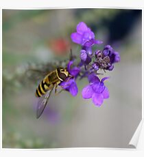 Hornet on Purple Flower Poster