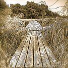Bridge by Tim Wright