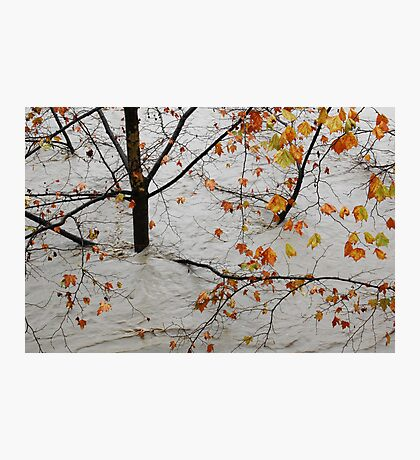 Flooded tree Photographic Print
