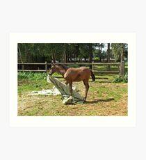 Natural horsemanship 2 Art Print