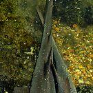 Shark Footsies ♥ by JasminsPhotos