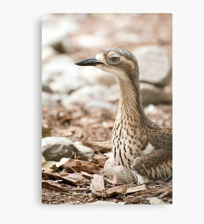 Invisible Curlew Metal Print