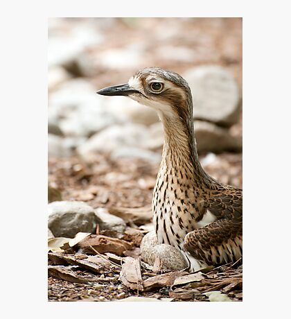Invisible Curlew Photographic Print