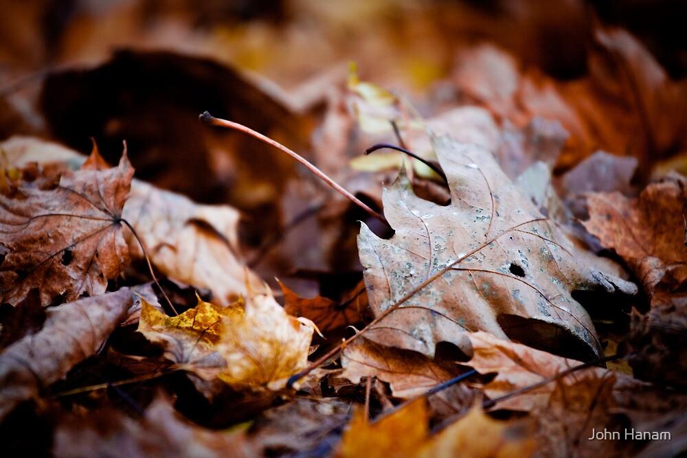 Pile of Leaves by John Hanam