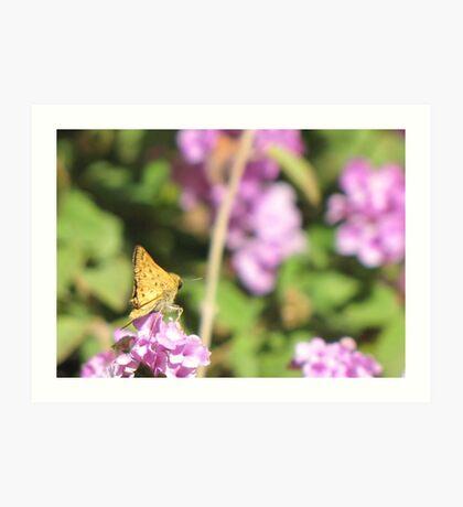 Butterfly ~ Fiery Skipper (Grass Skipper, Skipperling) Art Print