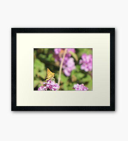 Butterfly ~ Fiery Skipper (Grass Skipper, Skipperling) Framed Print