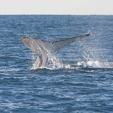 Humpback Whale Tail 8225 by DavidJ