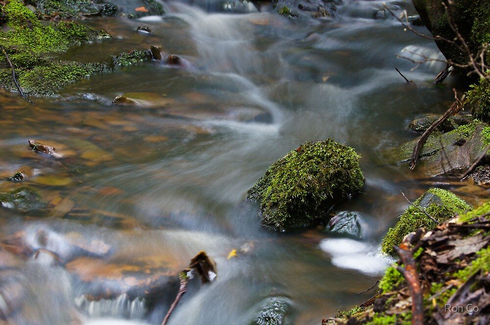 The delicacy of the rock, the lichen , the water  by Ron Co