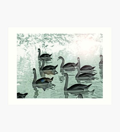 Swans school. Art Print