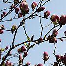 Spring Beauty by Danika & Scott Bennett-McLeish