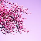 Pink by Nicole  Hastings