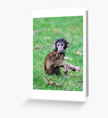 Young Barbary Monkey Greeting Card