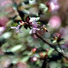 Bee Line by Chris Samuel