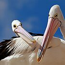 Just To Be Close To You - Pelican Series by Tainia Finlay