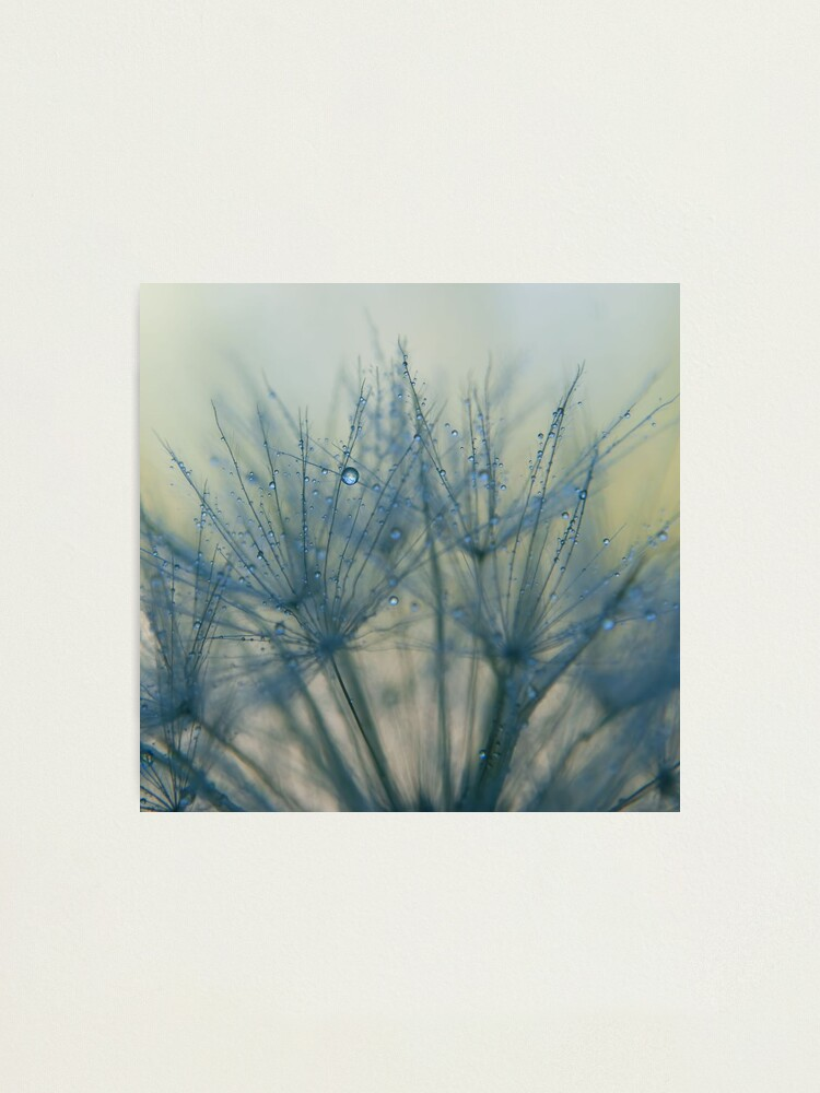 Alternate view of morning blues Photographic Print
