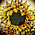 ThouArtSunflower by Collette B. Rogers