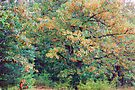 Autumn Colors In August by NatureGreeting Cards ©ccwri
