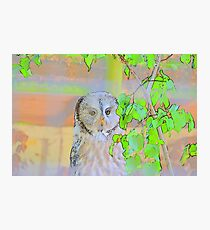 Artistic Owl Photographic Print