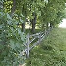 Fence Line by PPPhotoArt