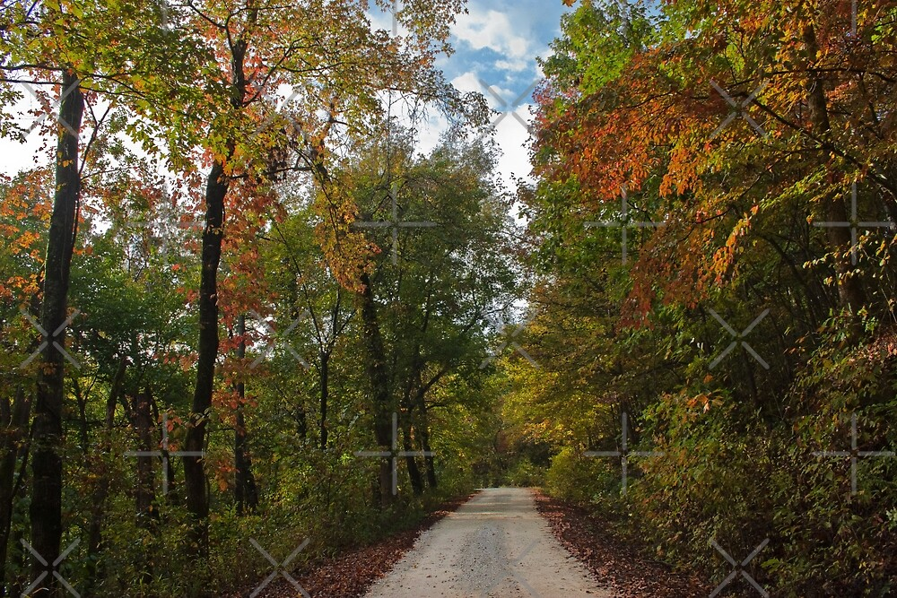 Colorful Pruitt's Path by Lisa Putman