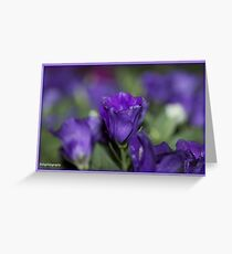 Selective Focus Greeting Card