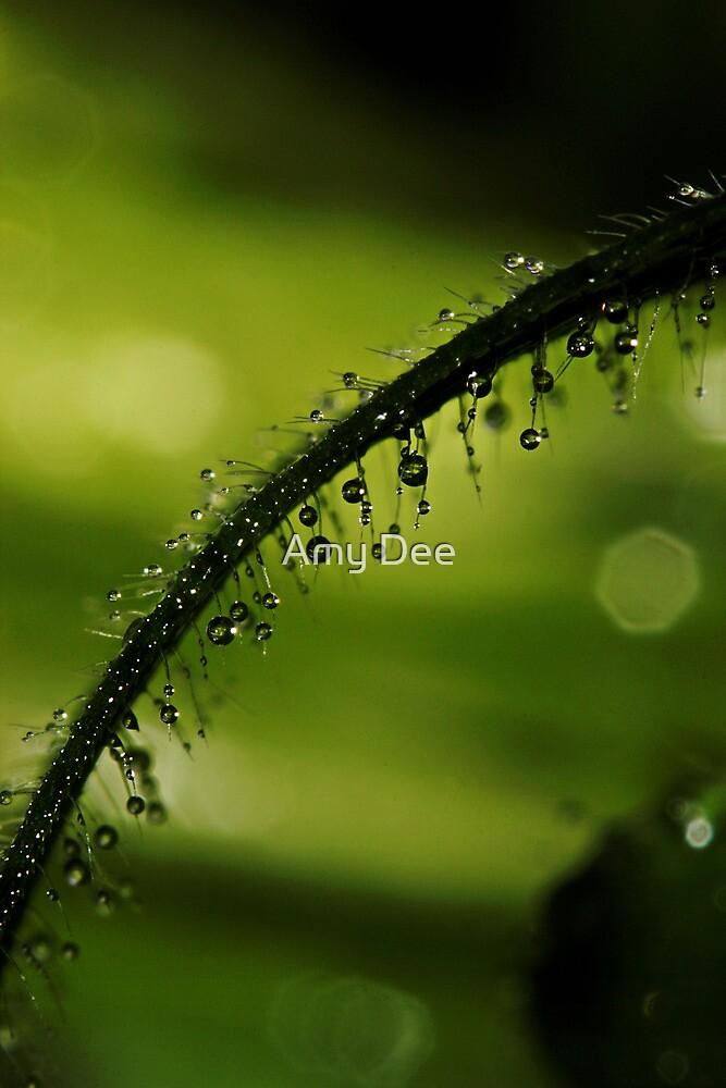 Green Fuzz by Amy Dee