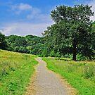 the path by LivvysLense