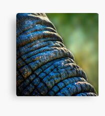 The Elephant's Wrinkles Canvas Print