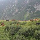 Al pascolo sul Monte Rosa...ITALIA - EUROPA - MONDO - by Guendalyn