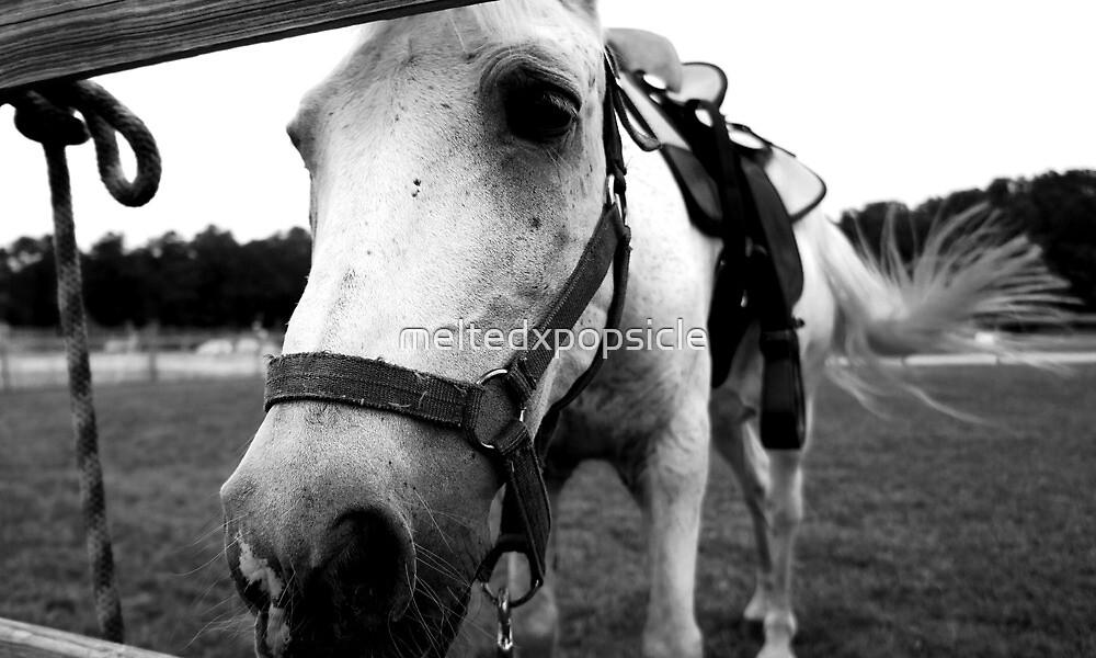Grey Horse by Jessica Liatys