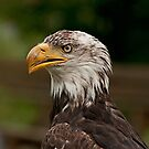 Do these feathers make my beak look big? by Mike Oxley