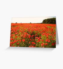 Vibrant poppy field Greeting Card