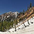 Trail to Red Pine Lake, Looking Back by Ryan Houston