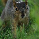 Curious by KatsEyePhoto