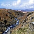 Linbeck Gill by mikebov