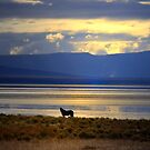 I Feel Alone by Charles & Patricia   Harkins ~ Picture Oregon
