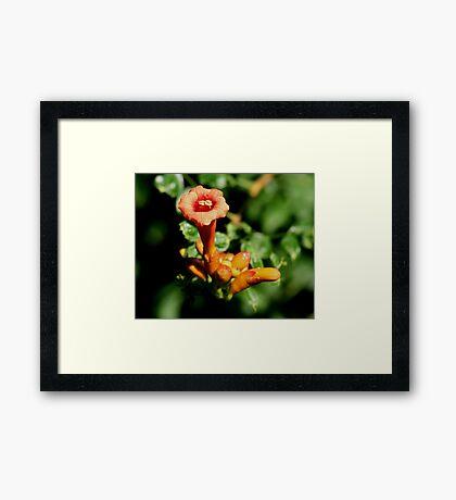 One Trumpet Flower Framed Print
