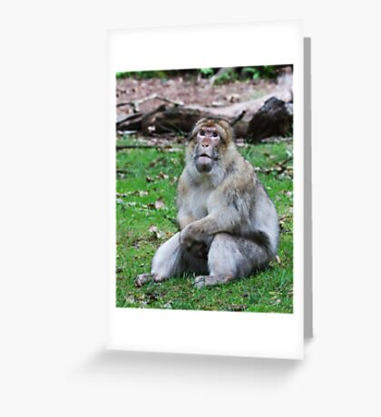 Will my Prayed be answered ( Barbary Monkey) Greeting Card
