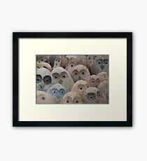 """""""Twit T Who Who Who?"""" Framed Print"""