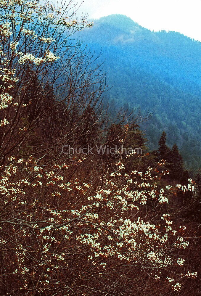 NEWFOUND GAP,SPRING by Chuck Wickham