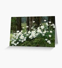 Sheltering daisies. Greeting Card