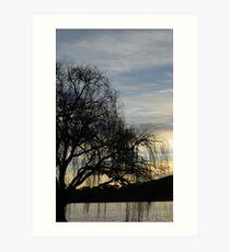 sombre willow Art Print