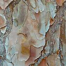 Tree Bark by Sharon Brown
