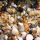 Seashell Jumble One by Robert Phillips
